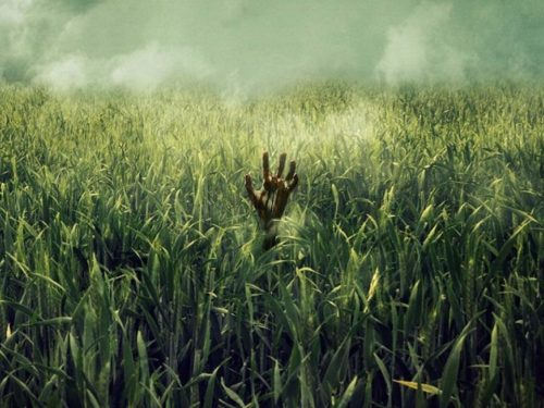 Nell'erba alta – Trailer ufficiale del film Netflix tratto da un racconto di Stephen King